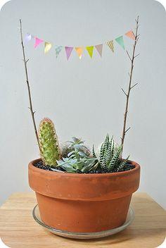 DIY - Cactus garden - Decoration - Plants pot - Idea - Home - Garden