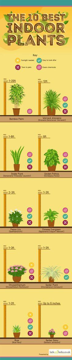 The 10 Best Indoor Plants » Nature Moms