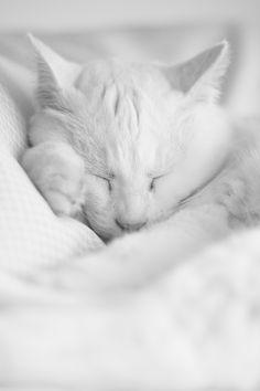 Feline by Eric Dutoit