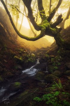 Beech Forest - Gordeo - Spain - by Maik Elyk on 500px
