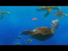 To celebrate #WorldOceansDay 8 June 2012, I am sharing my favourite sea-based film clip - Crush and Squirt from Finding Nemo. Classic!