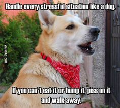 Be a dog!