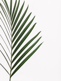 36 New Ideas For Nature Plants Art Green Leaves Green Leaves, Plant Leaves, Palm Tree Leaves, Foto Poster, Plants Are Friends, Nature Plants, Green Nature, Jolie Photo, Issey Miyake