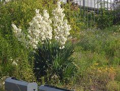 Kaktus / kvetina na zahradu