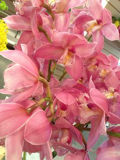 16b474c20d955d Cymbidium orchids-a stunning and long lasting floral gift!