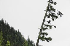 STEWART-CASSIAR / Field & Forest