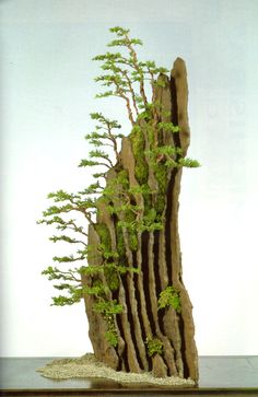 Indoor or Outside Ornamental Flowering Bonsai Timber Some bonsai timber like every other tree flower and produce fruit. A daily apple tree, for instan. Ikebana, Flowering Bonsai Tree, Bonsai Plants, Bonsai Trees, Plantas Bonsai, Garden Terrarium, Bonsai Garden, Bonsai Forest, Indoor Bonsai