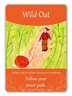 Wild Oat - Bach Flower Oracle Card by Susanne Winberg. Message: Follow your path.