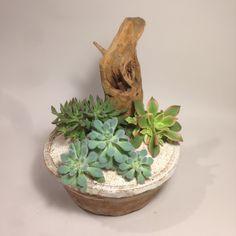 Succulents - Succulent Zen Garden 02