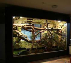 Amazing green iguana terrarium