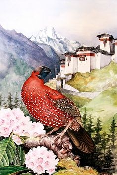 Image by VAST Bhutan  The Satyr Tragopan, also known as the Crimson Horned Pheasant is a pheasant found in Bhutan.