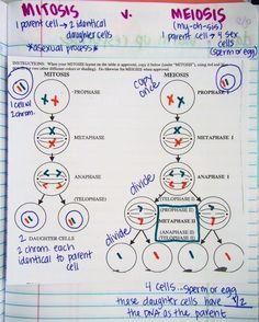 Study Biology, Biology Lessons, Teaching Biology, Science Biology, Science Lessons, Biology Revision, Life Science, Cell Biology Notes, Biology Memes