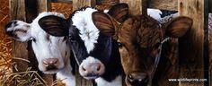 http://www.wildlifeprints.com/collections/gadamus/products/jerry-gadamus-got-milk-24-x10