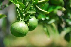 The Green Orange - Sugar Free Baked Beans Recipe