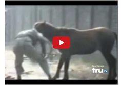 Watch+Horse+Attacks+A+Man+In+Retaliation
