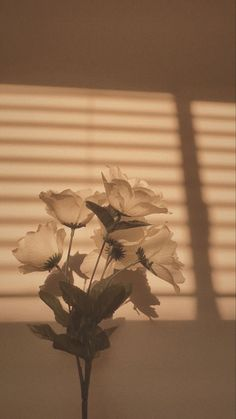 Phone Wallpaper Images, Plant Wallpaper, Aesthetic Desktop Wallpaper, Scenery Wallpaper, Aesthetic Backgrounds, Wallpaper Backgrounds, Sky Aesthetic, Aesthetic Colors, Flower Aesthetic