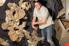 Dr Stephen Poropat with bones from Savannasaurus elliottorum. Auteur : Judy Elliott / Age Australian of Dinosaurs Museum of Natural History (AAOD)