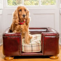Darcy the Cocker Spaniel enjoys her own chesterfield sofa! From the Lords & Labradors range fo Chesterfield Sofa Dog Beds. Leather Bed, Soft Leather, Leather Sofas, Waterproof Fabric, Dog Sofa Bed, Dog Beds, Chesterfield Living Room, Pet Paradise