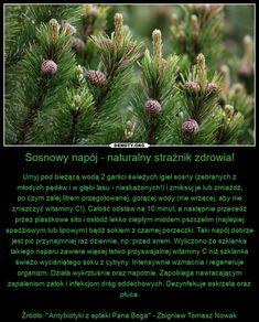 Remedies, Plants, Home Remedies, Plant, Planets