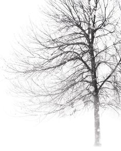 Whiteout - Winter, Black and White Photography, Snow, Blizzard, Storm, Tree Photograph, Landscape Print, Nature. $30.00, via Etsy.