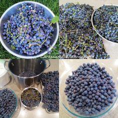 Concord Grape Recipes, Concord Grape Jelly, Grape Jam, Freezer Jam Recipes, Jelly Recipes, Fruit Recipes, Freezer Meals, Gelato Recipe, Garden Seeds
