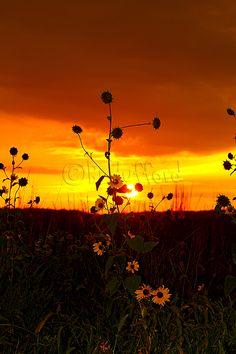 283/366 Sunset 09272012 2 Billie Hufford 2012. More photos, photography tips, etc.   https://www.facebook.com/pages/Billies-Photos/124893917625895?ref=tn_tnmn