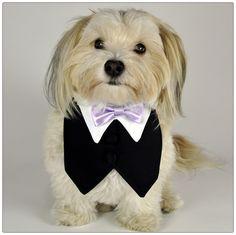 Black Tuxedo Vest w/ Lilac Bowtie for my boy pitt