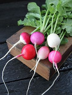 Organic Easter Egg Radish 5 LB 214000 seeds *** Want to know more gardening hack, click on the image.