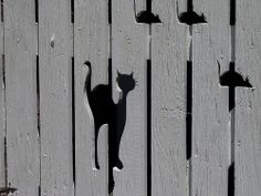 """Cat and Mice Gate"" by UGArdener via Flickr."