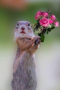 Růže, Kytice, Květiny, Kytice Růží, Narozeniny