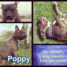 Gorgeous Poppy is on her way from emergency boarding to rescue :) Safe at last beautiful :-* #safeandsound #rescue #rescuedog #dontshopadopt #dog #newlife #happy #love #givesomuch #giveadogachance #somanyneedanewhome #adoption #pet #beautiful #bestfriend #mansbestfriend www.safe-and-sound.org