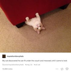 A list of tumblr posts that prove cats are perfect. In this one, a cat discovered that he fit under the couch and he meowed until his human came to look. Haha!