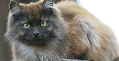 Näin helposti voit puhdistaa patjasi: Tarvitset vain kahta ainetta Cats, Animals, Gatos, Animales, Kitty Cats, Animaux, Animal Memes, Cat Breeds, Kitty