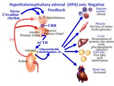 prevention-management-of-side-effects-of-systemic-steroids-3-638