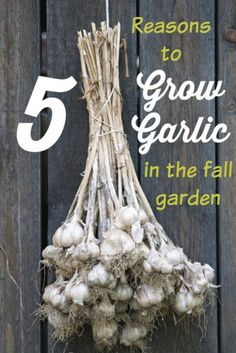 5 Reasons to Grow Your Own Garlic