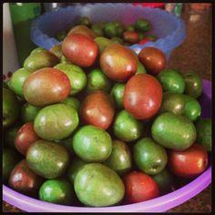 Jocotes. Nicaraguan fruit!!   Goodness!!