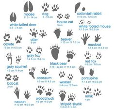 Animal tracks information #infographic....  Take a look at more at the photo