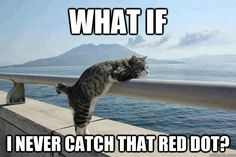 Sailboat Funny Memes | funny-lolcats-cats-on-boat-what-if-never-catch-red-dot-daydreaming ...