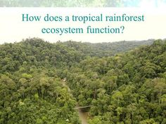 How does a tropical rainforest ecosystem function? Rainforest Ecosystem, Ecological Succession, Hedge Apples, Physical Geography, New Community, Photosynthesis, Ecology, Tropical, Environmental Science