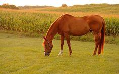 Animal Intelligence - Horses