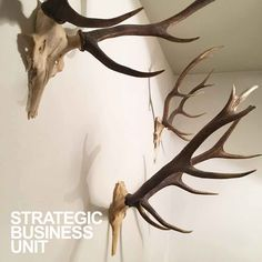 made in rome. Strategic Business Unit, Rome, The Unit, How To Make, Shopping, Rome Italy