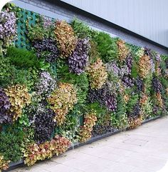 Living Wall System, Living Wall Planter, Green Wall System Suite Plants is part of Vertical garden wall - Jardin Vertical Diy, Vertical Garden Plants, Vertical Garden Design, Vertical Gardens, Living Wall Planter, Wall Planters, Vegetable Garden Planner, Small Backyard Landscaping, Luxury Landscaping