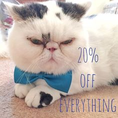 Beat the January blues with 20% off everything this week only. Use code - JANBLUES  #discount #t #januaryblues #january Lou Instagram, January Blues, 20 Off, Beats, Everything, Coding, Animals, Animales, Animaux