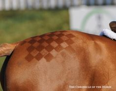 It's All In The Details Jennifer Bliss's ride, Pokerface, sported some fancy quartermarks.