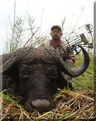Cape Buffalo   2008