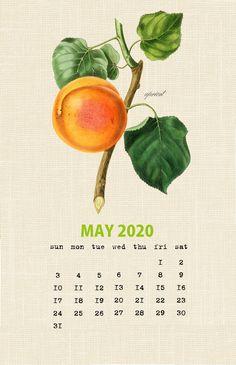 Free Calendar May 2020 Printable Botanical Printable Calendar 2020, Cute Calendar, December Calendar, Blank Calendar Template, Photo Calendar, 2019 Calendar, Vintage Calendar, Calendar Wallpaper, February Wallpaper