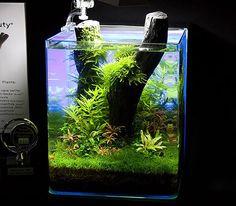 Dennerle aquarium aquarium nano cube 30 litres dennerle for Zierfische hannover