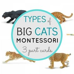 Thank you for your interest in my Types of Big Cats Montessori Cards. 24 cards/12 pairs to bring into the home or classroom. I created these cards with two activities within one. The child can match to objects, or use as a language activity.Included:LionBengal TigerBlack PantherMountain LionCheetahLeopardBobcatWhite Bengal TigerJaguarWhite Siberian TigerBlack JaguarPumaSee my blog, Montessori Pre-Reading BundleMontessori Pink Series BundleThis work is licensed under a Creative Commons Attributio