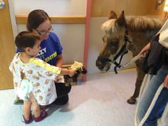 It is not without some heroic effort on the behalf of the staff at Victory Gallop that Petie the Pony makes his weekly hospital visits. But every ounce of energy expended to prepare the half miniature horse, half pony is paid off in smiles, giggles and parental gratitude. - See more at: http://inside.akronchildrens.org/2014/06/26/petie-the-pony-makes-a-day-in-the-hospital-much-brighter-for-our-patients-and-staff/#sthash.SugIiXsG.dpuf