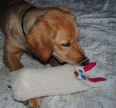 If your pup loves the sound of an empty water bottle, she'll love this handmade dog toy, a squeeze bottle bunny toy!